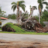 FEMA won't cover cost of replanting tree canopy after Irma