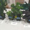 NASA scientists partners with Fairchild Tropical Botanic Garden