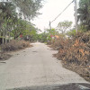 Did Virginia Key become Irma's dumping ground?