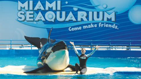 Mexican owner of 32 aquatic parks wins Miami Seaquarium lease