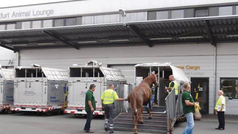 New Lufthansa weekly flight brings new class of snowbird: horses