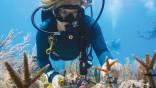 University of Miami aims test program at Miami Beach shoreline
