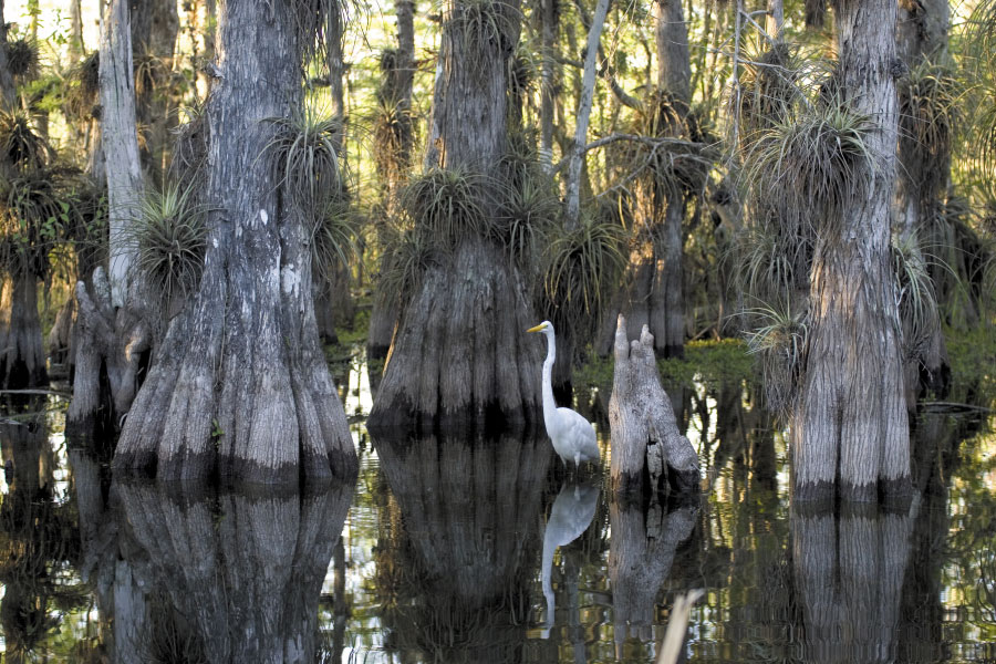 County ducks Lake Okeechobee land buy stance for Everglades water