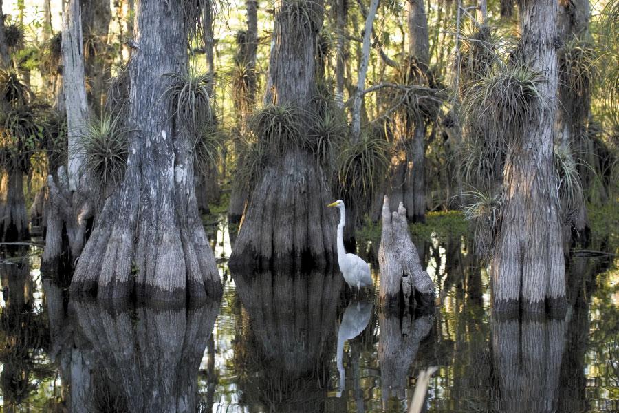 County ducks Lake Okeechobee land buy stance for Everglades water