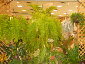 Tropical Fern and Exotic Plant Show and Sale