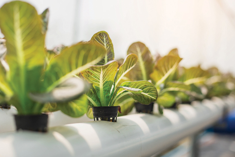 Hydroponic farming planned on vacant Miami Beach lots