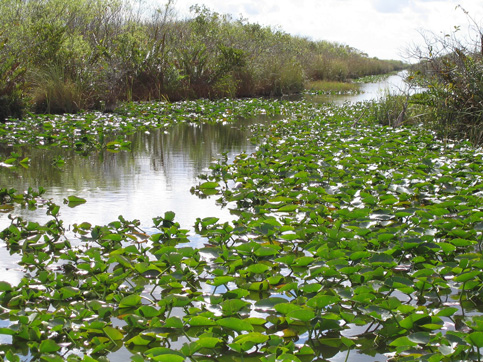 Bids final step to raise Tamiami Trail, flow water to Everglades