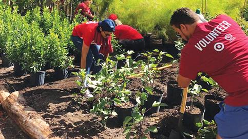 Million Trees plans pruned