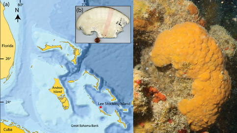 University of Miami team uses rare sea animal to track climate change history
