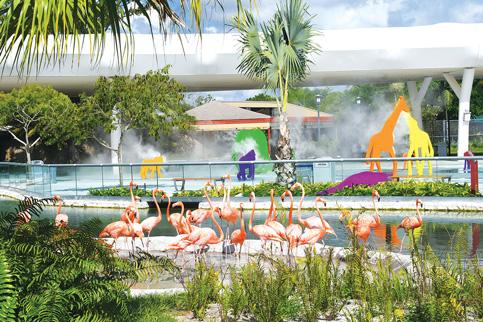 Zoo Miami winging way to record